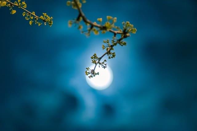 moon-5382924_640 (1).jpg